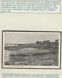 "FALKLAND ISLANDS - EARLY POSTCARD "" A SEA ELEPHANT """