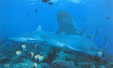 Randall Scott   -  Frenzy - Grey Reef Sharks - Limited Edition of 750 ( No Cert)