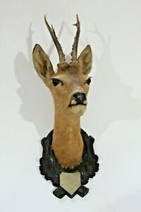 Vintage Black Forest Taxidermy Pronghorn Mounted Head 1959