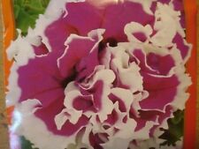 30+ DOUBLE GRANDIFLORA PIROUETTE ROSE PETUNIA FLOWER SEEDS / ANNUAL