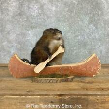 #22410 E+ | Novelty Canoe Muskrat Taxidermy Mount For Sale