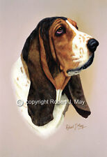 Basset Hound Print by Robert J. May