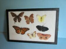 1 lot Real framed Butterfly collections