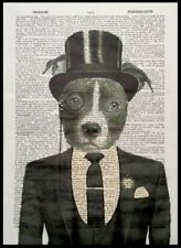 Staffy Print Dictionary Art Picture Dog Smart Animal In Suit Wearing Clothes