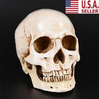 Retro Realistic Human Skull Replica 1:1 Model Medical Art Teach Life Size USA