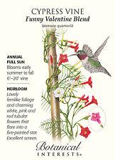Funny Valentine Blend Cypress Vines Seeds - .75 grams