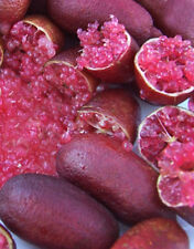 MIA ROSE FINGER LIME SEEDS X 20: Only and Original Australian Rare Native Seeds