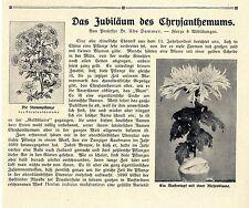 L' anniversario della Chrysanthemums * di trafilatura dal prof. Udo Dammer 1908