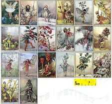 CDHM DOLLSHOUSE Vintage Miniature RED FLOWER FAIRIES   Print Set 1:12