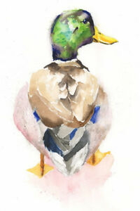 Limited Edition Print of MALLARD DUCK watercolour by HELEN APRIL ROSE   434