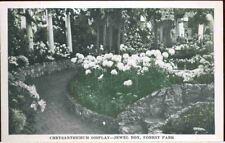 (dp4) St. Louis MO: Forest Park, Chrysanthemum Display