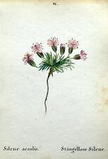 Silene acaulis Alpino Flor Weber antigüedad Original Impresión Botánica 1872