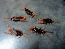 5x Fake Plastic Cockroach Bug Insect April Fools Party Trick Cockroaches Prank
