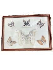 """More details for 6 butterfly taxidermy in wooden frame 11""""x 15"""""""