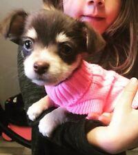 Chihuahua (xs) de noël pull en mailles rose animal chien vêtements en tricot pour chien pull