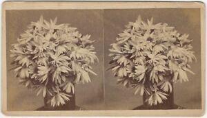 Daisy Flowers in Vase G.C. Robinson Lynn Massachusetts Stereoview Card