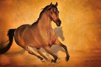 Barry Hart Cowboy Horse Western Poster 13x19 RODEO ART PRINT Let er Rip color