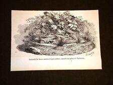 Esposizione di Parigi del 1858 Imitazione di cesto di fiori Palazzo Industria