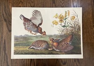 Audubon Pinnated Grous, Princeton Audubon Double Elephant Edition