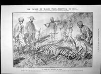 Old Print Prince Wales Tiger Shooting India Balfours Defeat Liberal 1906 20th