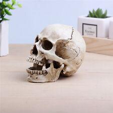 Cranio umano modello anatomico teschio scheletro modellino resina statuetta