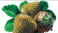 100 PCS Seeds Bonsai Gold Strawberry Courtyard Garden With Fruit Potted Garden S
