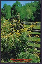 Postcard  GOLDENROD Yellow Flower Old Time SPLIT RAIL FENCE  Rustic Farm Setting