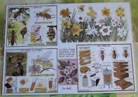 Creación Cartel escolar mantel individual Abejas de Rossignol Ruche Miel Formato