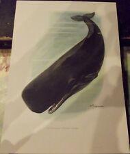N°76 Whale Sperm Whale Mammal Poster