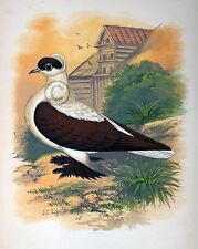 """Fancy Pigeon """" The Swallow """" By James C. Lyell Poster Art 13"""" X 19"""""""