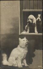 Fluffy White Kitty Cat & Adorable Puppy Dogs in Window c1905 Rppc