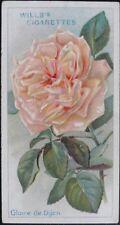 Single: No.32 Gloire De Dijon - ROSES - Wills Ltd 1912
