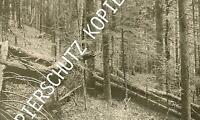 Söllbachau bei Tegernsee - Urwald um 1910   X 50-19