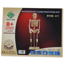 Human Skeleton Model Learning Kit Science Educational Tool Anatomy Kids Toy