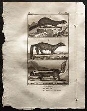 1799 - Buffon - Le vison, le pekan, la mouffette du Chili - Gravure