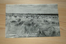MALHEUR FRENCHGLEN ANTELOPE PHOTO POSTCARDS Oregon LANDMARK Old BLACK WHITE RPPC