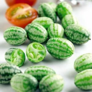 40 CUCAMELON SEEDS – FAST FREE POSTAGE