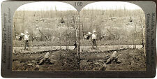 Keystone Stereoview Cut & Burned-Over Timber Land, MN 1910's Education Set # B