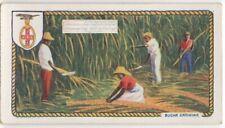British Commonwealth Sugar Cultivation Queensland Guyana c90 Y/O Trade Ad Card