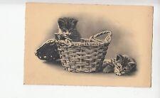 B80565 in basket  cat  front/back image