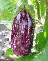 Aubergine (Violett-Gestreift) 20 Samen