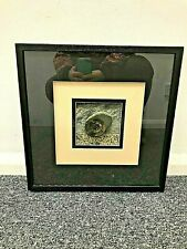 Framed, Glazed, Contemporary Piece, Section of an Ammonite, Polished Fossil