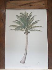 Diane Rome Peebles signed botanical prints of palm trees x5