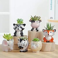 Cute Succulent Planter, Succulent Pots with Drainage Hole Flower Plant Pot