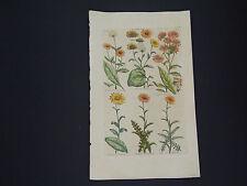 Sir John Hill, Botanical, The Vegetable System 1761-1775 Pardwort #08