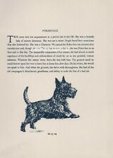 Scottish Terrier Scottie With Small Story Vintage Dog Print 1932 Diana Thorne