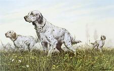 ENGLISH SETTER WORKING GUNDOG DOG FINE ART PRINT by Sandro Nardini (Italian)