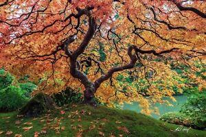 Michael Ashley Collectible Landscape & Nature Fine Art Photography Zen Garden