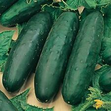 25 Marketmore CUCUMBER seeds organic  - foil pack ~ Yes we send to Tas