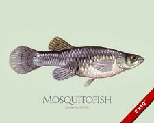 MOSQUITOFISH GAMBUSIA FISH PAINTING AMERICAN FISHING ART REAL CANVAS PRINT